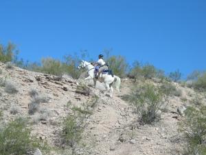 Desert Forest Ride066