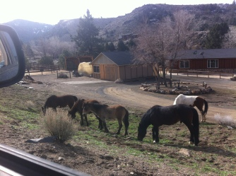 wild mustangs! (all over the place)