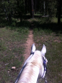 Pony leadership ears. Locked on to the trail and motoring.
