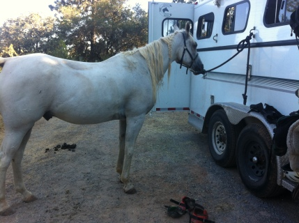 post-leg-stretcher ride down the lane. why does the pearly white pony need a bath?