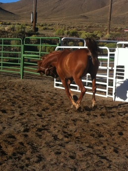 Elegant, athletic endurance horse 'r' us. *giggle* Was waiting for her to fall over.
