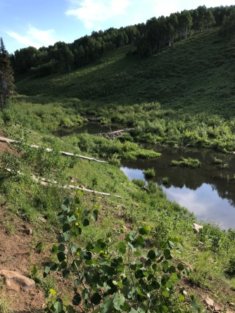 Chain of beaver dams along the Strawberry River