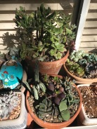 The lower pot is my pot of weirdos. SOme really funky ones in there. Upper pot is the pot of plants that I have a sketchy relationship with. Mostly crassula and aeonium, both of which I have marginal luck with.